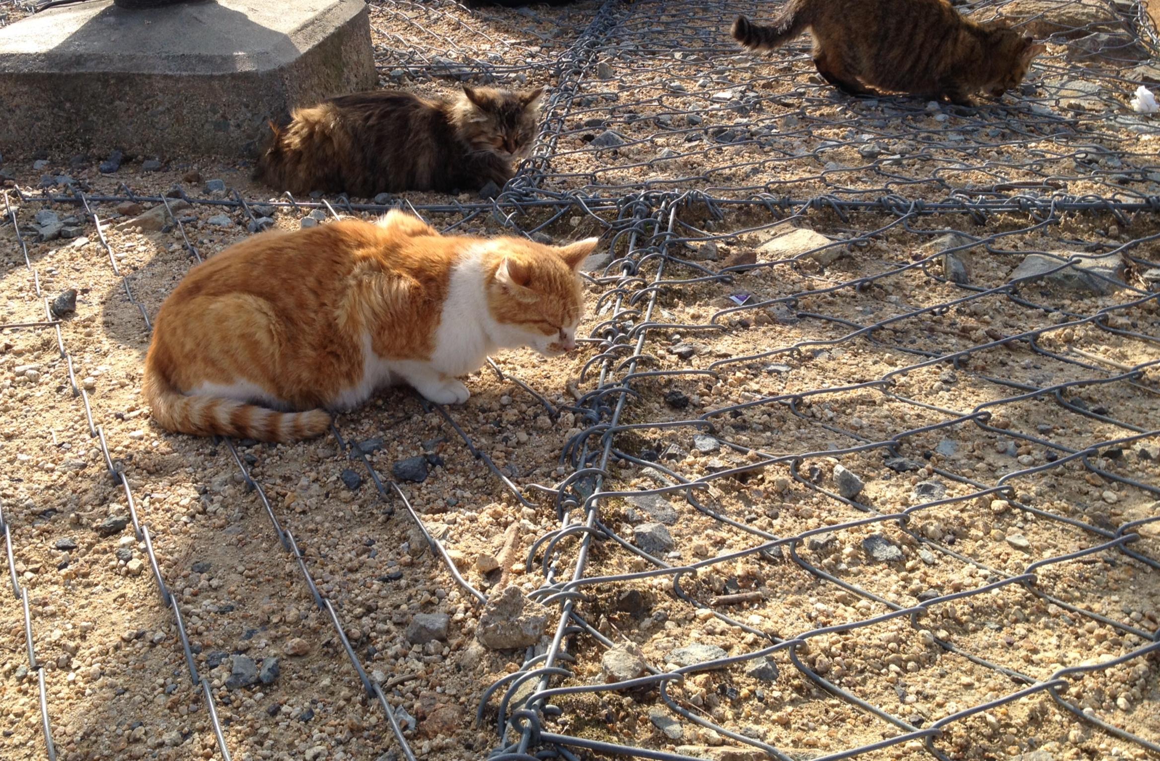 風吹岩の猫